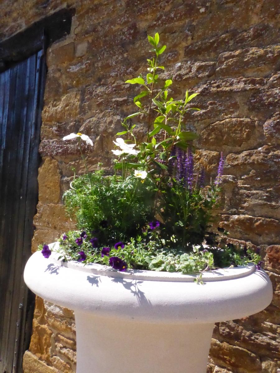 Haddonstone summer purple